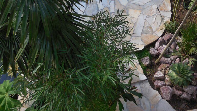 Exotische tuin met braziliaanse Flagstones.