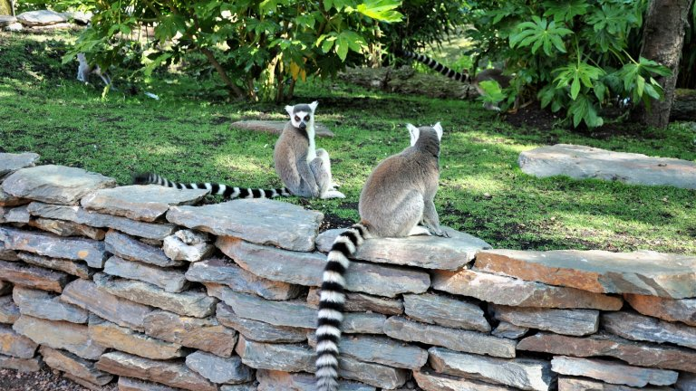 Flagstone muren gestapeld in dierentuin - vogelpark.