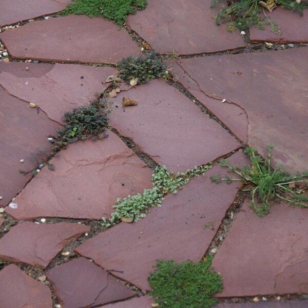 Rode Weser Flagstones los gelegd met kruipgoed er tussen door.