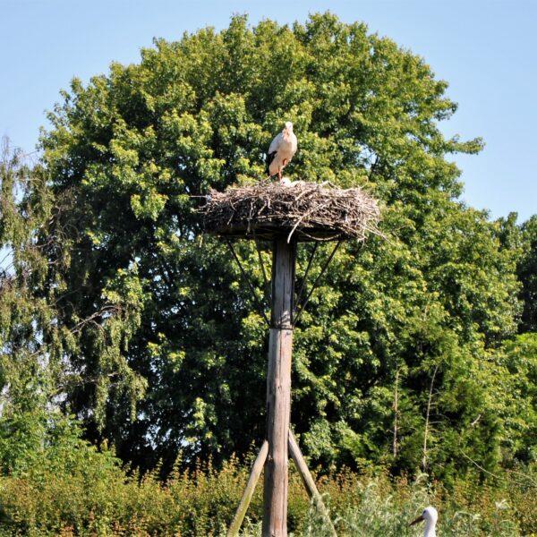 Sfeerfoto Avifauna Vogelpark.