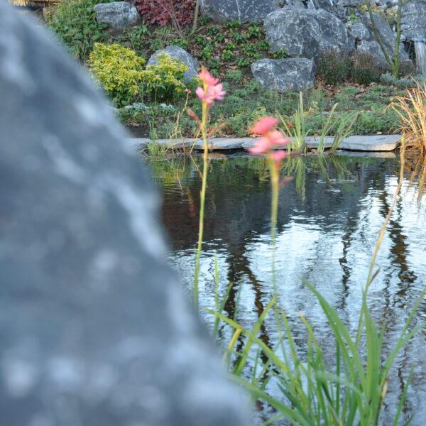 Flagstones rondom vijver